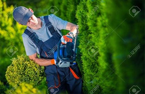 Trimming/Pruning